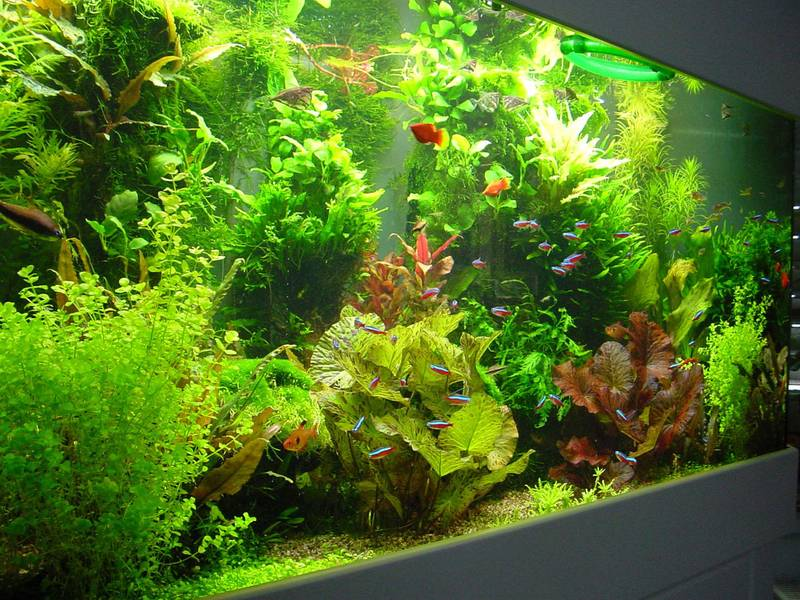 Wasserpflanzen, Düngung und Wasserwechsel